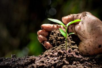 plantar un arbol