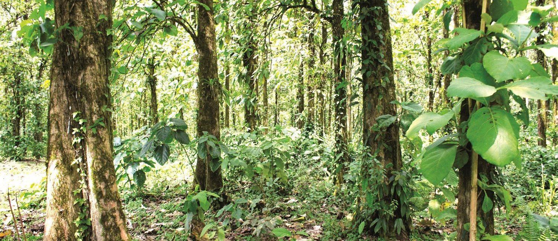 Forestales Costa Rica