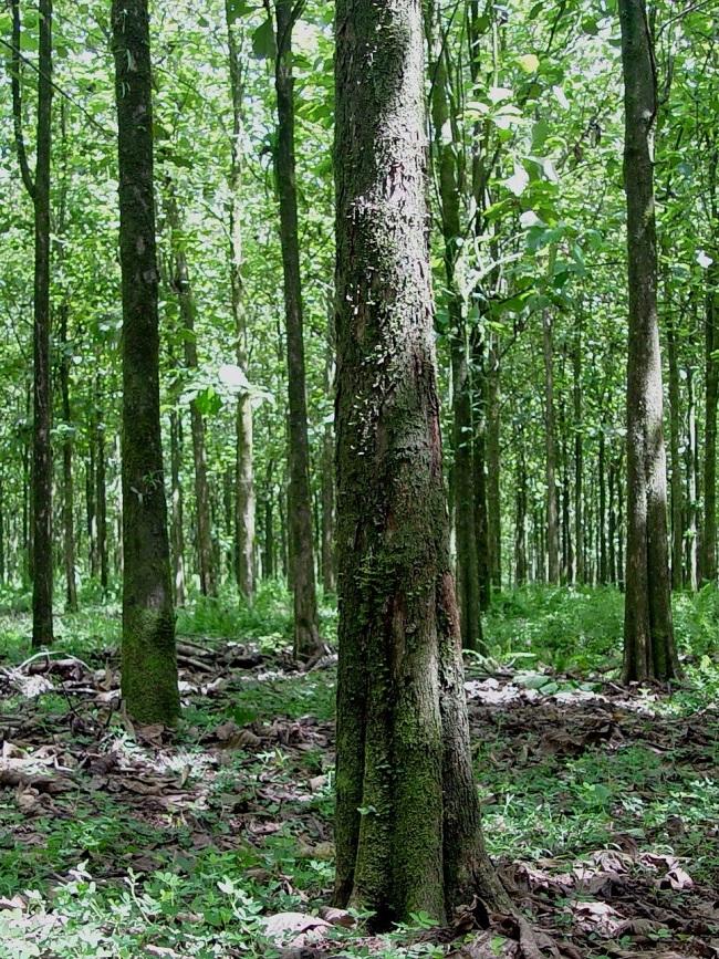 Plantaciones costa Rica