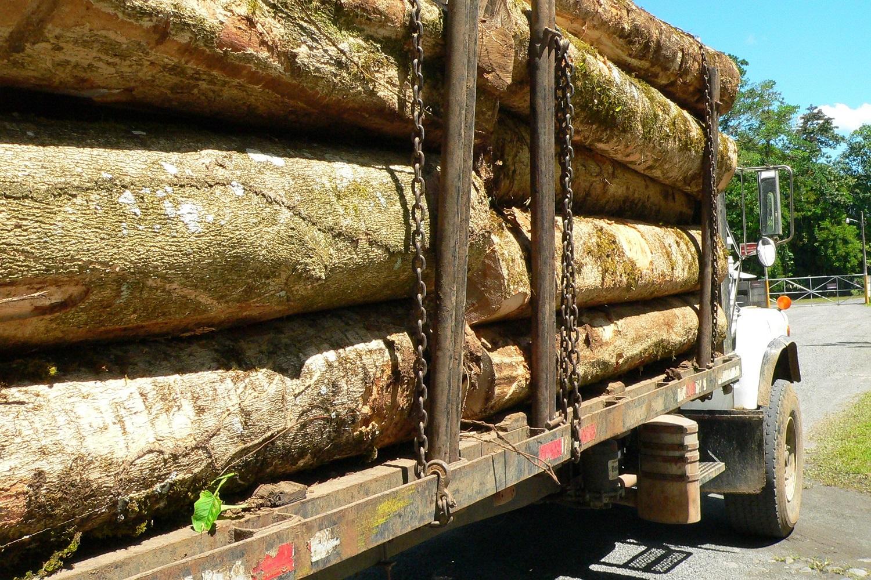 madera costa rica