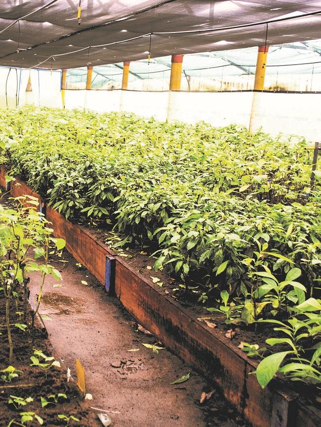 reforestacion Costa Rica