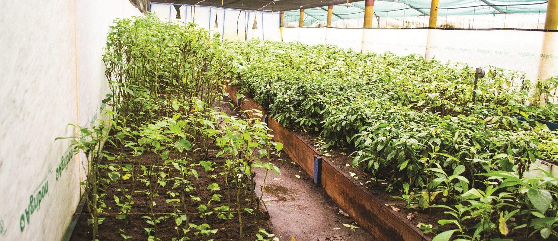 reforestaciones costa rica
